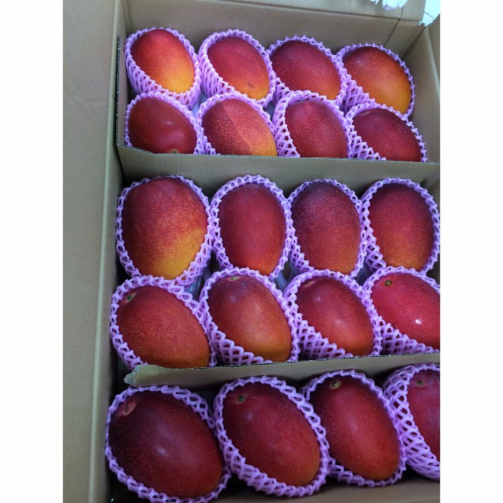 High quality fruit mango importers at good price for sale
