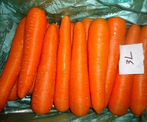 Natural carrot from Dubai