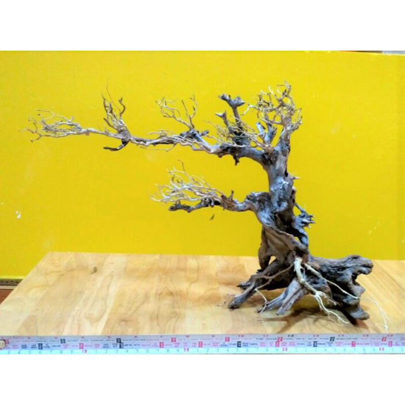 Aquarium Bộ: Aquarium Bonsai Whatsapp/Viber/Line: + 84 963949178