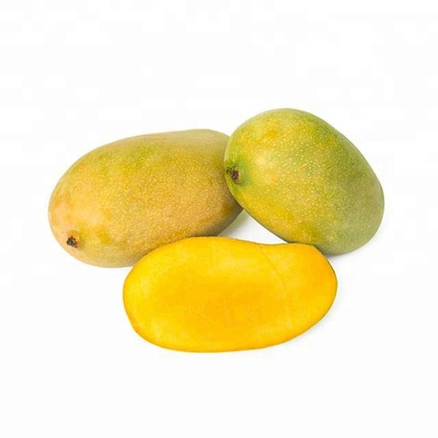 Fresh Indian Mango / Fresh Mango Exporters India / Fresh Kesar Mango