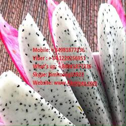 VIETNAM FRESH DRAGON FRUIT FOR EXPORT
