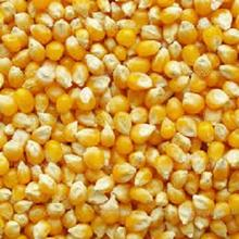 Cracked yellow Maize/ Corn for animals
