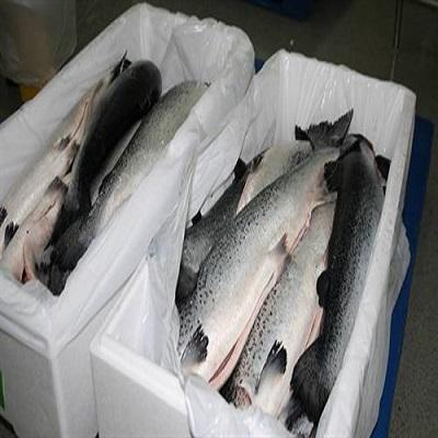 High Quality Fresh / Frozen Atlantic Salmon Fish