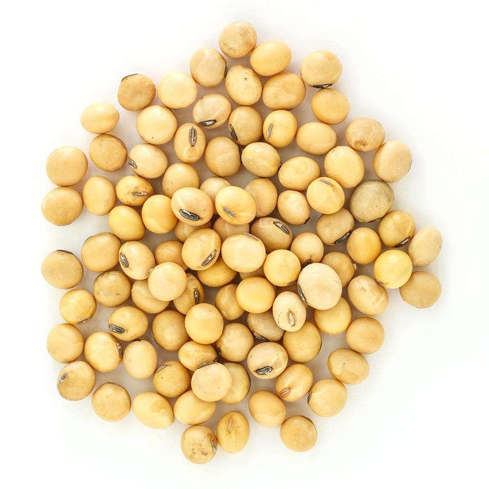 2019 Food Organic Soybean/ Soya Bean/ Soybeans brazil