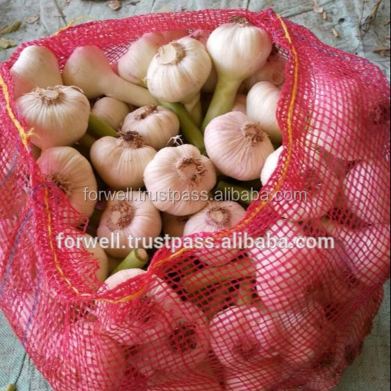 Importer to buy fresh garlic from Egypt with good quality and cheaper price