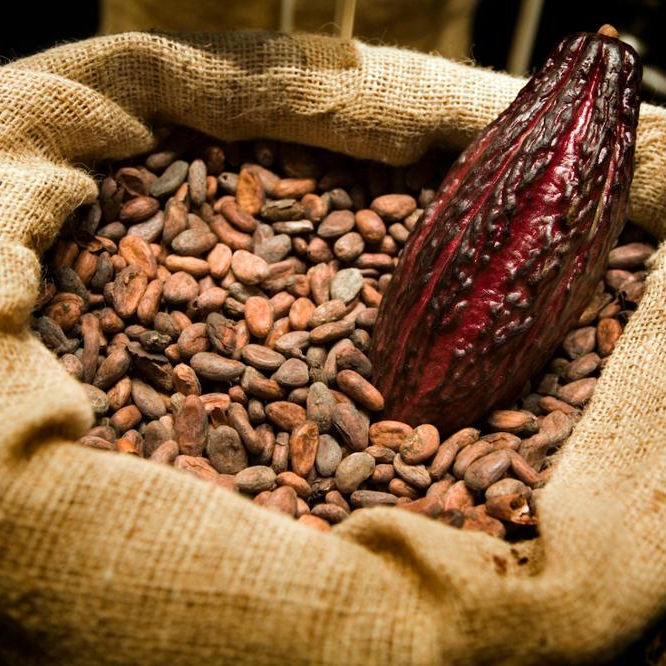 Grade A Cocoa Beans Dry Raw Natural
