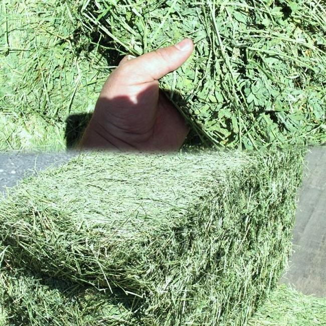 Dairy-Quality Alfalfa Hay For Sale