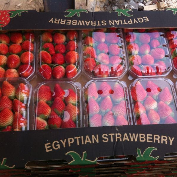 Fresh Egyptian Strawberry grade A
