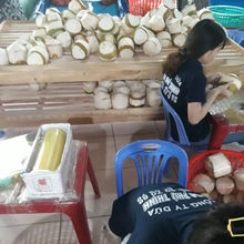 Fresh young Coconut in Bulk with high quality from Vietnam - Ms: Holiday whatsapp: +84-845-639-639