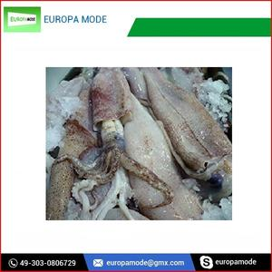 Cheap Quality seafood frozen whole round squid