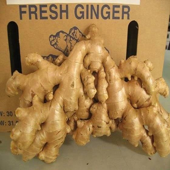 Top Quality Bulk Fresh & Organic Ginger