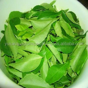 India fresca hojas de curry mejor precio FOB lista