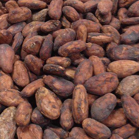 Best Quality Grade A Sun Dried Cocoa Beans