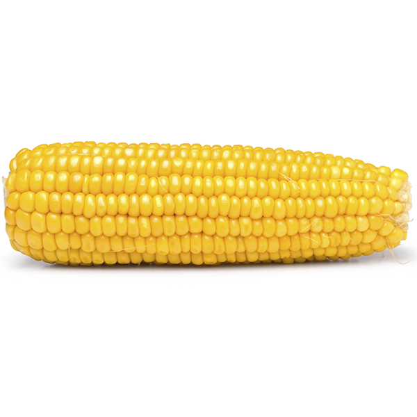 Yellow Corn / Dried Yellow Maize