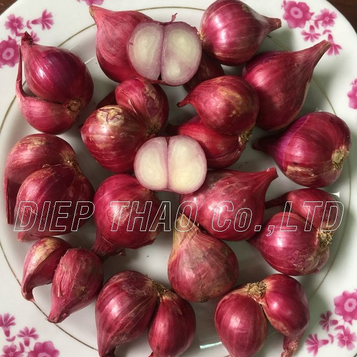 FRESH RED ONION/ FRESH ONION BEST PRICE