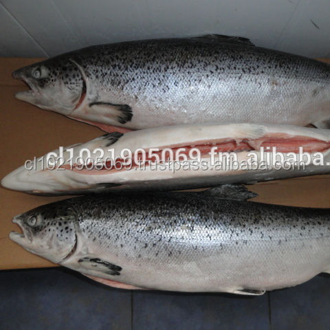 Frozen Atlantic Salmon offer END OF YEAR