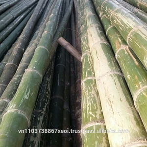 High quality moso bamboo/ tonkin bamboo for construction