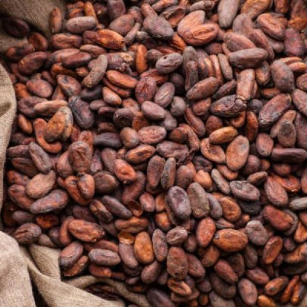 Cocoa beans for sale