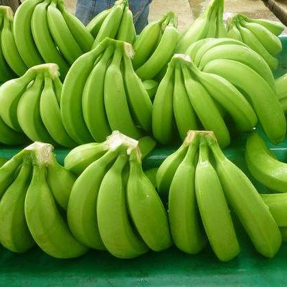 Romania quality fresh Cavendish Banana for sale