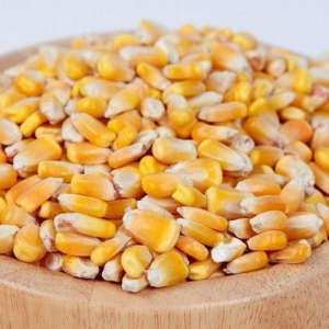 YELLOW MAIZE FOR ANIMAL FEED / YELLOW CORN FOR ANIMAL FEED