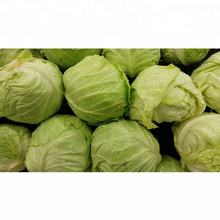 Wholesale Fresh Cabbage / Fresh Cabbage Price / Cabbage Exporter In India