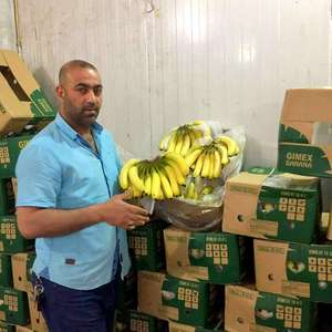 VIETNAM FRESH CAVENDISH BANANA HIGH QUALITY +84984418844 whatsapp