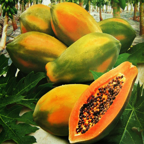 High Quality Fresh Papaya