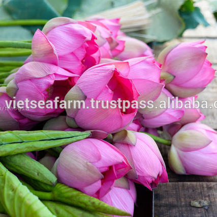 Fresh Lotus Flower from Vietnam - Competitive price