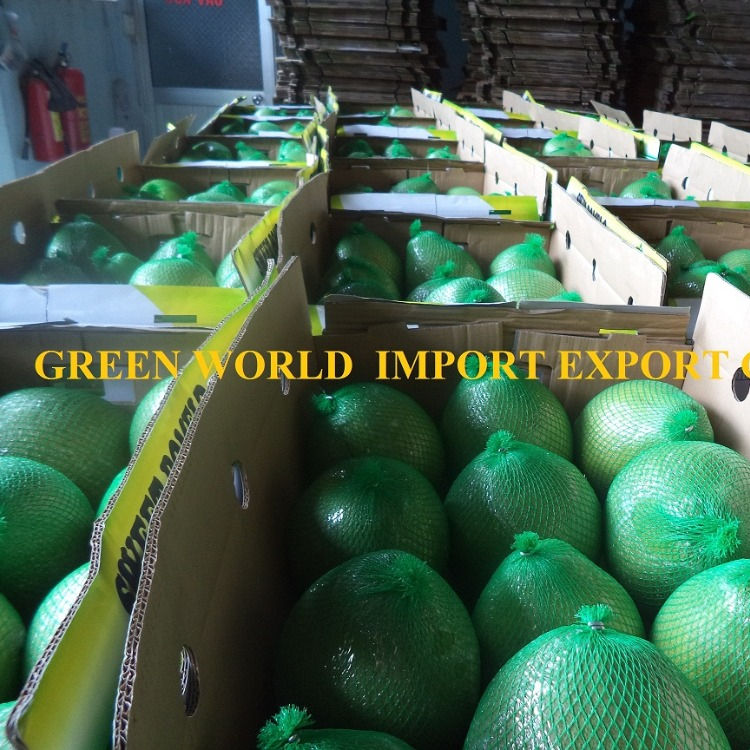 BEST PRICE FOR HIGH QUALITY FRESH POMELO