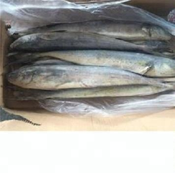 mahi mahi ,frozen delicious mahi mahi /Frozen Seafood Mahi Mahi Fillet/mahi mahi fillets in stock , cleanned mahi mahi fish