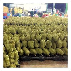 Fresh Durian from Thailand Quality A and B , Fresh Durian fruits for sale