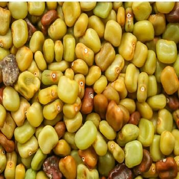 High Quality Sesbania Seeds For Sale