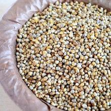 Fresh Style Green Bajra /Green Millet Bean For Human Consumption Bajra For Export