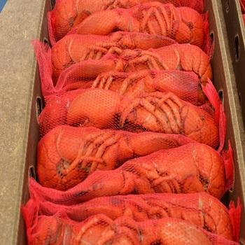 Direct Supply Top Quality Frozen Whole Round Crayfish/Crawfish
