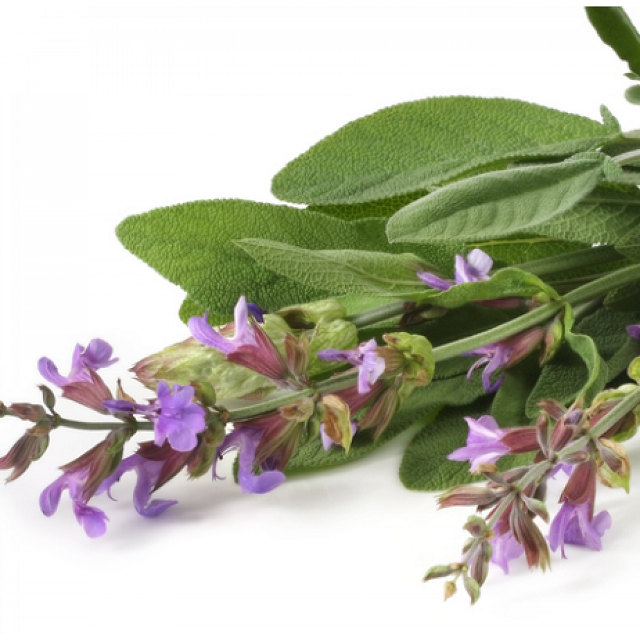 Organic Clary Sage Essential Oil Manufacturer
