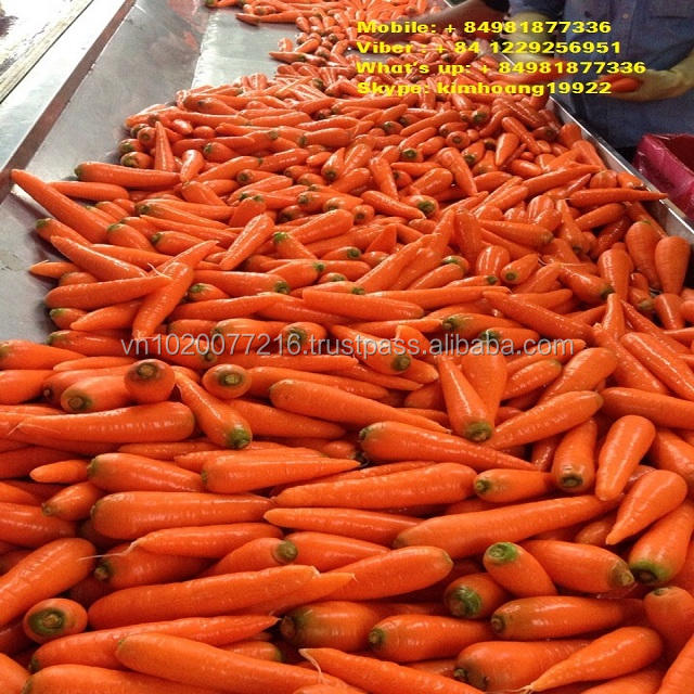Fresh carrot 2018/ good price