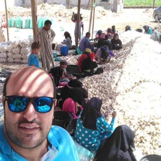 FRESH GARLIC FROM EGYPT 2020
