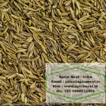 Cumin seeds quality singapore 99.5% origin INDIA from Spice Nest
