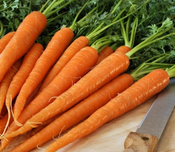 FRESH CARROT IN BIG SIZE (Whatsapp: +84 845 639 639)