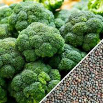 Fresh Broccoli Seeds For Sell