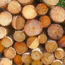 Teak Wood - Round Logs, Swan Timber Logs for sale