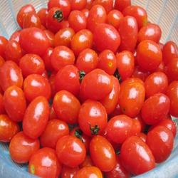 Fresh tomatoes from Hong thai Farm in Viet Nam 2019