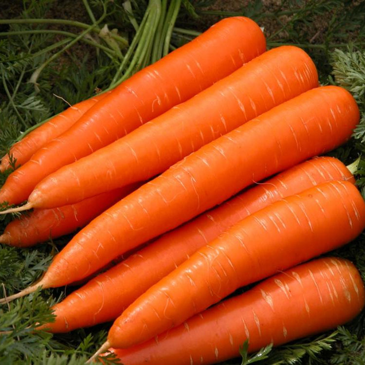FRESH CARROT 100% NATURAL AND BEST PRICE, ** HOT DEAL** FOR IMPORT, VIETNAM 2020