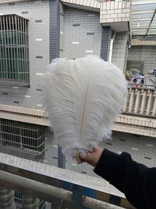 OSTRICH FEATHER AND OSTRICH EGGS