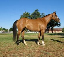 live horses for sale,healthy horses for sale