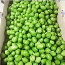 Quality Fresh Olives Now Available for Exportation on 30% Discount Sales