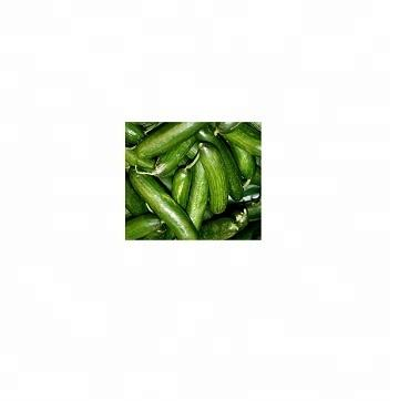 SGS Certified Fresh Green Cucumber For Sale