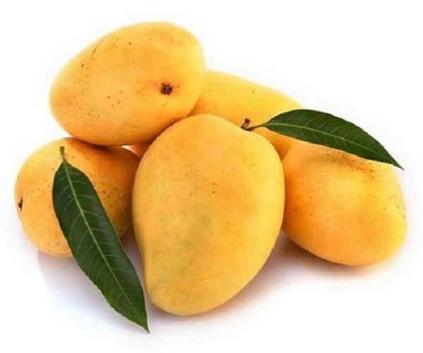 Export Quality Bangladeshi Mango Wholesale Price