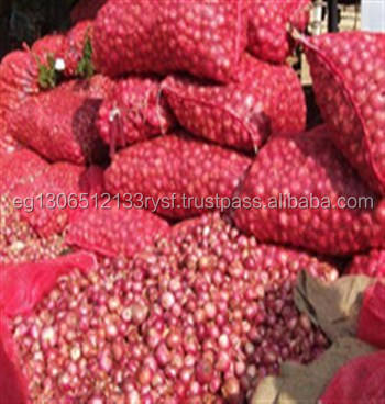 fresh red onion best quality for sale