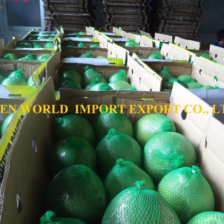 HIGH QUALITY FRESH POMELO FROM VIETNAM - BEST PRICE FOR NOW